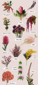 25 beautiful types of flowers ideas on peony flower flowers of the moment from left to right top to bottom pieris onica