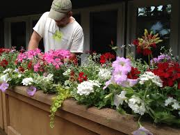planting containers with annuals