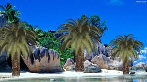palm tree hd desktop wallpaper 30808