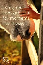 Equestrianlife Pferdesprüche Englisch Zitate Für Reiter Pferde