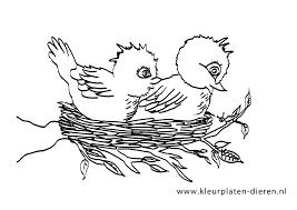 Kleurplaten Voor Volwassenen Vogels Vogel Malvorlagen