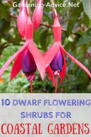 dwarf flowering shrubs for seaside gardens