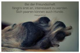 Zitate Hund Trauer Leben Zitate