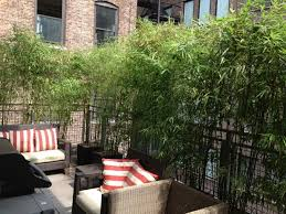 Bamboos are a great way to cover a balcony or terrace for privacy. They  grow quickly and are low maintenance.