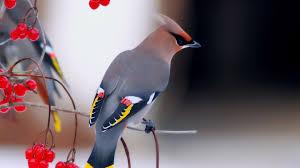 Bird HD Wallpaper & Background • 3910 ...