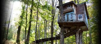 Tree House Design Ideas For Modern Family InspirationSeekcom