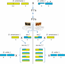 Multiple Genes Cause Postmating Prezygotic Reproductive Isolation.