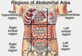 Related online courses on physioplus. Anatomy Quadrants Anatomy Drawing Diagram