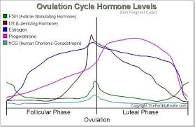Chart Of Menstrual Cycle Hormones Pin On Ehlers Danlos