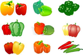 chili peppers vector. Modren Chili Chili Pepper Icons Collection Colorful Isolation Style On Chili Peppers Vector L