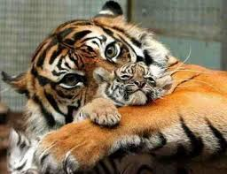 صور حيوانات اليفة images?q=tbn:ANd9GcS
