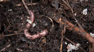 how to make your garden a magnet for worms