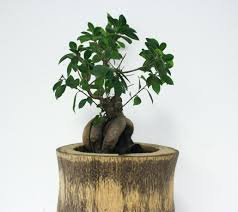 decorative plants for office. Plants For Home Decoration In India Cheap Artificial Decor Decorative Office Feng Shui Live Out Of
