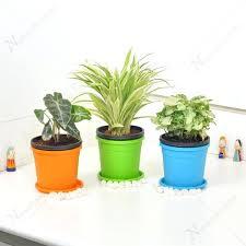 office plants for sale. Wonderful Plants Indoor Desk Plants Cubicle Friendly Table Top Office  For Sale With Office Plants For Sale L