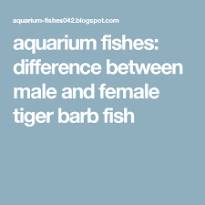 Tiger Barb Compatibility Chart Aquarium Fishes Difference Between Male And Female Tiger