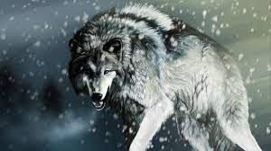 Cool Wolf Wallpapers - Top Free Cool ...