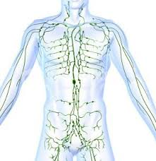 Massage Therapy What Is Lymphatic Drainage Therapy