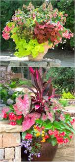 plant list 1 start from top pink fuchsia pink nia coleus mixed varieties green sweet potato vine