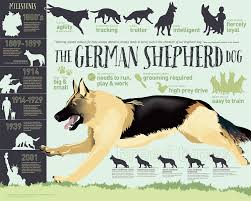 German Shepherd Dog Breed Growth Chart Names Info