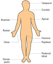 Peripheral Pulses Charting Location Of Peripheral Pulses Nclex Study Help School