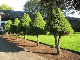 Nice Shades 7 Fast Growing Shade Trees To Slash Your Electric Good Trees For Backyard