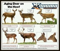 A Dixie Lady Deer Hunter Aging Deer Chart Whitetail Deer