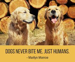 Funny Dog Quotes Custom 48 Cute Funny Dog Quotes Puppy Leaks