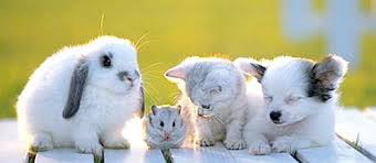 kittens and puppies and bunnies and hamsters. Beautiful Hamsters Puppies And Kittens Bunnies Hamsters Ducks  Google Search To Kittens And Puppies Bunnies Hamsters Pinterest