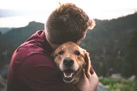 Service Dog Training Utah County