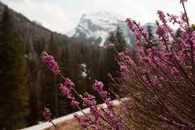 Parchi Veneto - Itinerario panoramico sull'Alpe di Lerosa