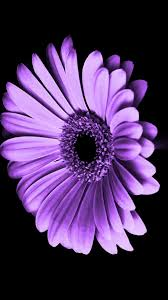 Purple Flowers Backgrounds Pink And Purple Flower Backgrounds 59 Images