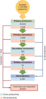 Endomembrane System Flow Chart Test Prep For Ap Courses Biology For Ap Courses Openstax