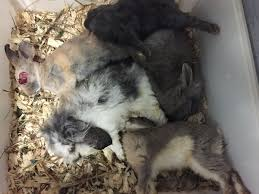 petco animals. Delighful Animals Animals Frozen Alive U0026 Gassed To Death At Petco PetSmart Supplier Https Inside Petco F