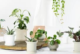 cool plant pots