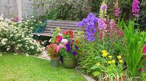 plants gardening palmers garden