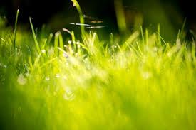 green grass field. Green-Grass-Fields-Wallpaper-311 Green Grass Field