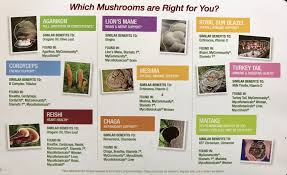 A Guide To Medicinal Mushrooms Mary Vance Nc