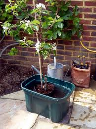 insert the roots of the tree on the ground and spread gently then fill the container with potting soil while until the roots are completely