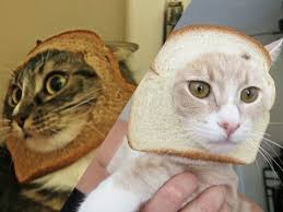 <b>BREAD</b> the <b>CATS</b>! - YouTube