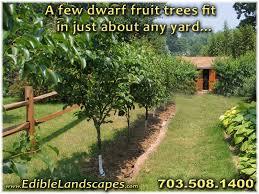 Using Dwarf Fruit Trees In Your Home Orchard  Organic Gardening Dwarf Fruit Trees Virginia
