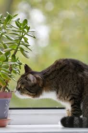 houseplant cat deters protecting houseplants from cats