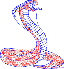cobra drawing for kids. Contemporary Kids How To Draw A Snake King Cobra Step By Step Snakes Animals On Cobra Drawing For Kids G