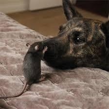 ネズミ 22