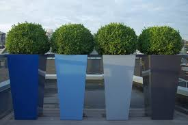 view in gallery sculpted boxwood in tall planters