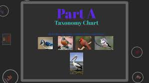 Blue Jay Robin Cardinal Finch And Pelican Taxonomy Chart 06 01 Classification Of Living Organisms Assignment By Casey