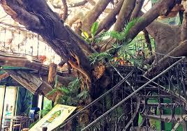 Restaurant And Coffee Tree House In Santa Elena Puntarenas Costa Treehouse Monteverde Costa Rica
