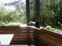 Katzen Sitzplatz Balkon Balkon Für Katzen Balkon Lounge
