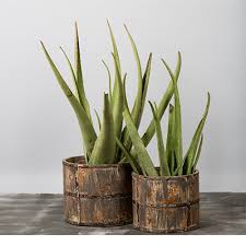 plant my love vintage wooden planters set of two