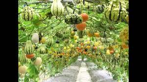 Vegetable Garden Ideas | avivancos.Com