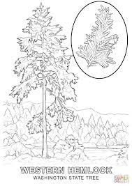 Small Picture Washington State Tree coloring page Free Printable Coloring Pages